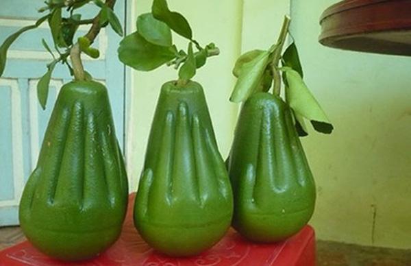 5 loại trái cây khắc chữ giá tiền triệu vẫn nhiều người tìm mua dịp Tết - Ảnh 2.