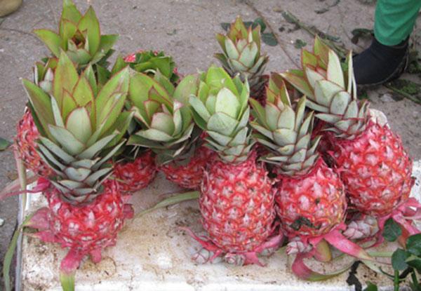 5 loại trái cây khắc chữ giá tiền triệu vẫn nhiều người tìm mua dịp Tết - Ảnh 8.