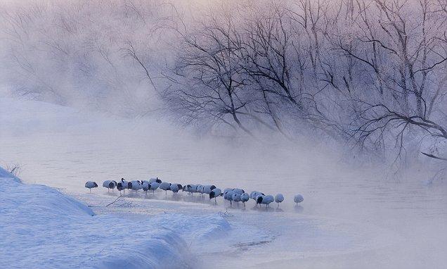 Những khung cảnh đẹp như cổ tích khi tuyết trắng bao phủ trên thế giới - ảnh 1