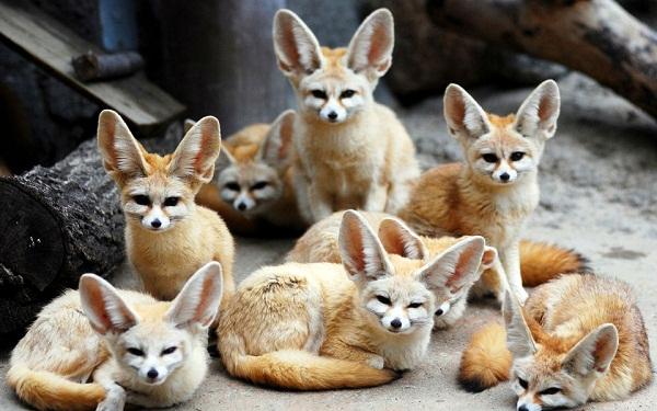 Đây chính là những vị nam vương, hoa hậu trong thế giới động vật - Ảnh 2.