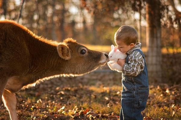 Phát hờn với bộ ảnh tuyệt đẹp bố chụp con trai trong nông trại - Ảnh 1.