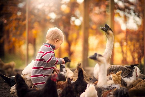 Phát hờn với bộ ảnh tuyệt đẹp bố chụp con trai trong nông trại - Ảnh 3.