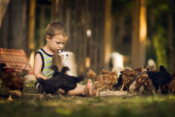 Phát hờn với bộ ảnh tuyệt đẹp bố chụp con trai trong nông trại - Ảnh 7.