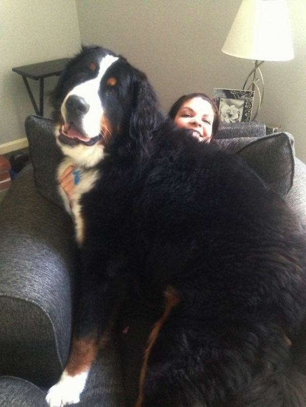 Những con thú cưng khổng lồ như sắp đè bẹp chủ nhân - Ảnh 2.