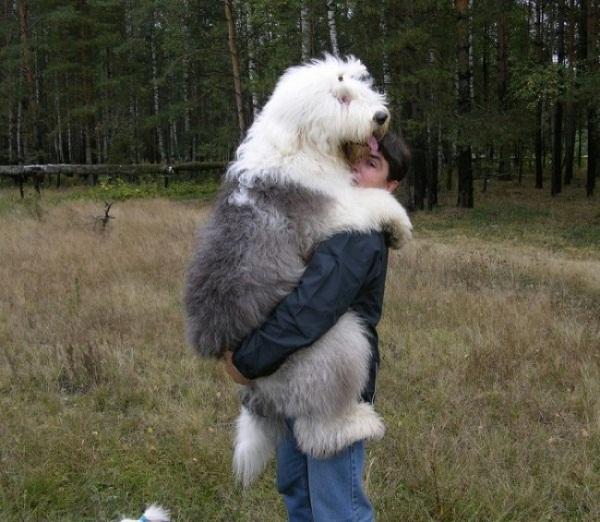 Những con thú cưng khổng lồ như sắp đè bẹp chủ nhân - Ảnh 4.