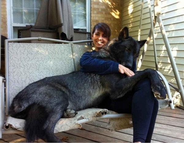 Những con thú cưng khổng lồ như sắp đè bẹp chủ nhân - Ảnh 5.