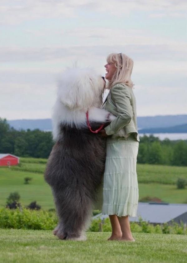 Những con thú cưng khổng lồ như sắp đè bẹp chủ nhân - Ảnh 8.