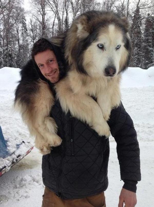 Những con thú cưng khổng lồ như sắp đè bẹp chủ nhân - Ảnh 9.
