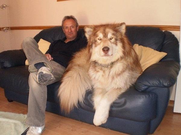 Những con thú cưng khổng lồ như sắp đè bẹp chủ nhân - Ảnh 10.