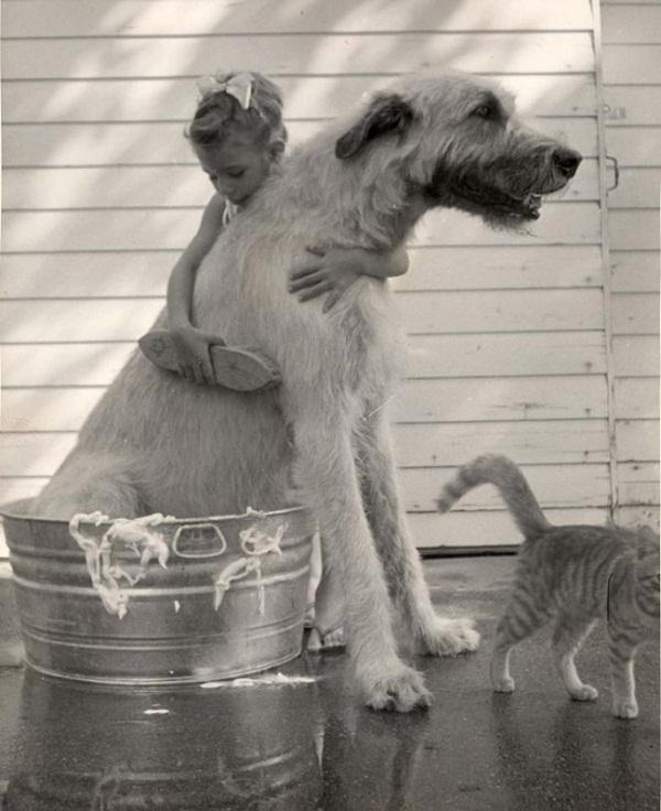 Những con thú cưng khổng lồ như sắp đè bẹp chủ nhân - Ảnh 11.