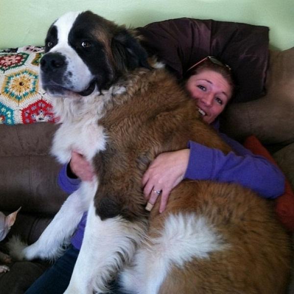 Những con thú cưng khổng lồ như sắp đè bẹp chủ nhân - Ảnh 13.