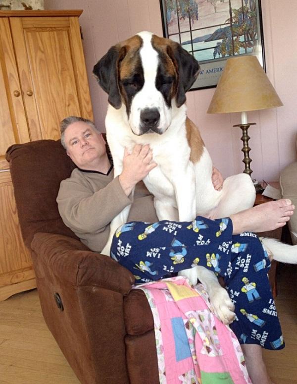 Những con thú cưng khổng lồ như sắp đè bẹp chủ nhân - Ảnh 16.