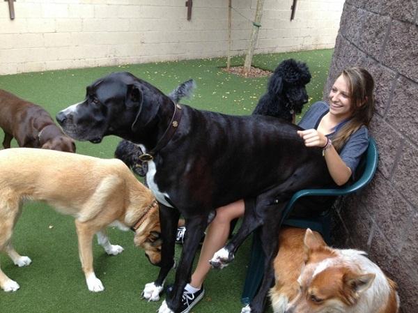 Những con thú cưng khổng lồ như sắp đè bẹp chủ nhân - Ảnh 17.