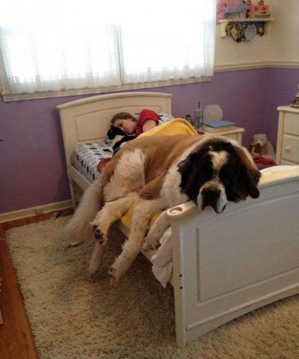Những con thú cưng khổng lồ như sắp đè bẹp chủ nhân - Ảnh 19.