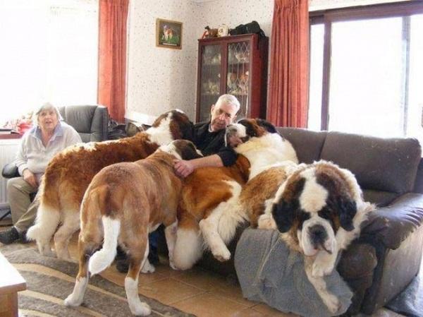 Những con thú cưng khổng lồ như sắp đè bẹp chủ nhân - Ảnh 20.