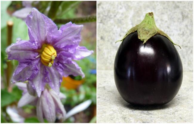 Ai cũng từng ăn củ quả quen thuộc này nhưng mấy ai biết hoa của chúng ra sao - Ảnh 4.