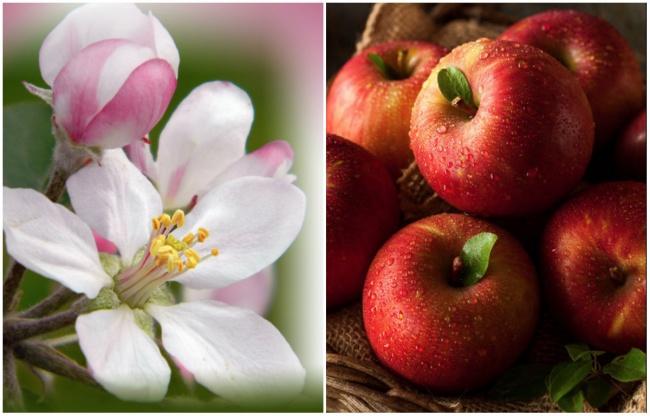 Ai cũng từng ăn củ quả quen thuộc này nhưng mấy ai biết hoa của chúng ra sao - Ảnh 5.