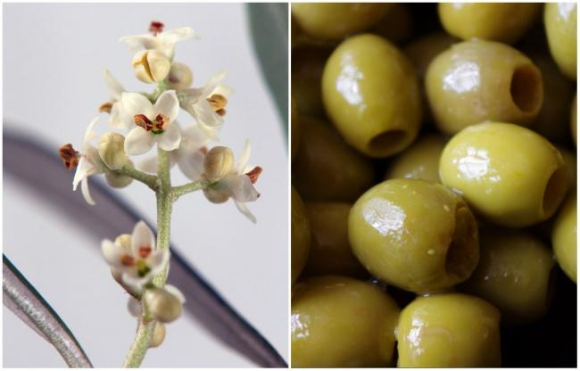 Ai cũng từng ăn củ quả quen thuộc này nhưng mấy ai biết hoa của chúng ra sao - Ảnh 6.