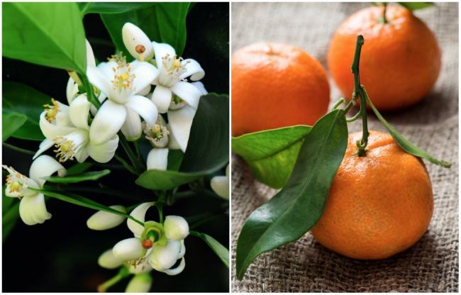 Ai cũng từng ăn củ quả quen thuộc này nhưng mấy ai biết hoa của chúng ra sao - Ảnh 7.