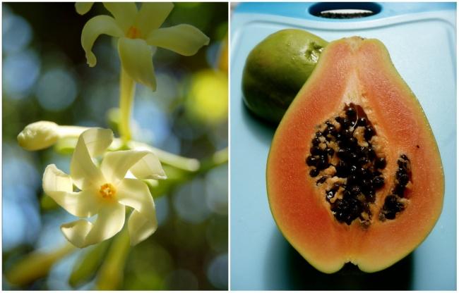 Ai cũng từng ăn củ quả quen thuộc này nhưng mấy ai biết hoa của chúng ra sao - Ảnh 8.