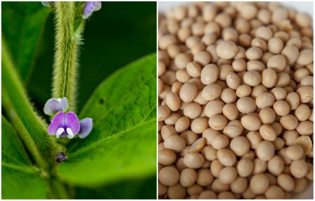 Ai cũng từng ăn củ quả quen thuộc này nhưng mấy ai biết hoa của chúng ra sao - Ảnh 13.