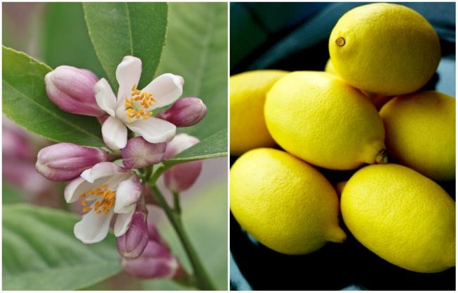 Ai cũng từng ăn củ quả quen thuộc này nhưng mấy ai biết hoa của chúng ra sao - Ảnh 14.