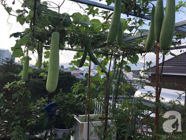 Sân thượng 10m² xanh mướt của bà mẹ dám bỏ sự nghiệp để ở nhà trồng rau, chăm con - Ảnh 3.