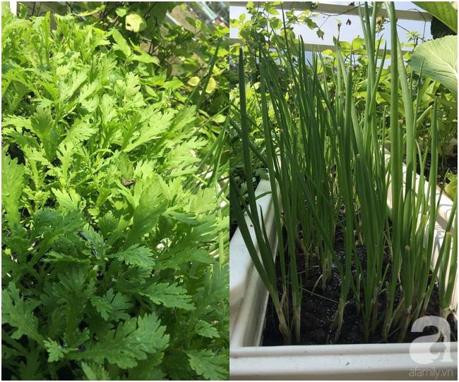 Sân thượng 10m² xanh mướt của bà mẹ dám bỏ sự nghiệp để ở nhà trồng rau, chăm con - Ảnh 10.