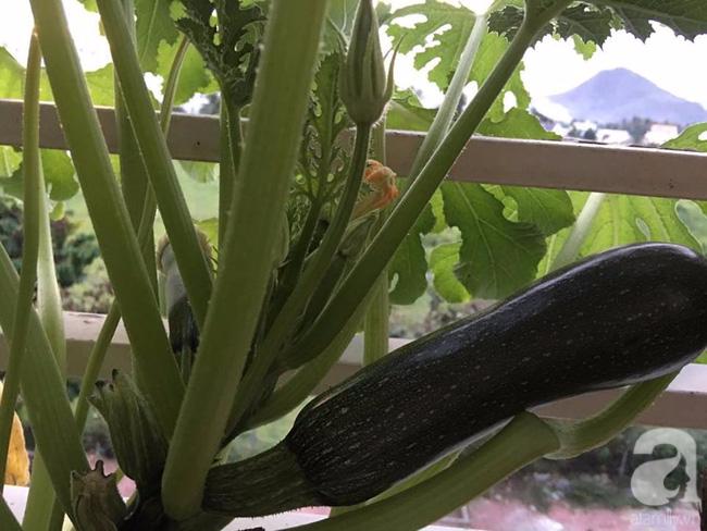 Sân thượng 10m² xanh mướt của bà mẹ dám bỏ sự nghiệp để ở nhà trồng rau, chăm con - Ảnh 14.