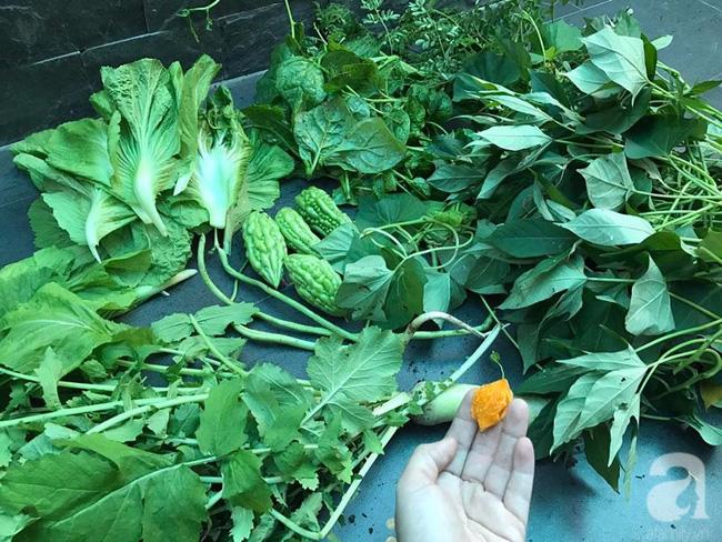 Sân thượng 10m² xanh mướt của bà mẹ dám bỏ sự nghiệp để ở nhà trồng rau, chăm con - Ảnh 18.
