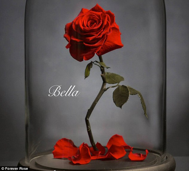 Chiêm ngưỡng những bông hồng vĩnh cửu đặt trong lồng kính y như truyện cổ tích - Ảnh 8.