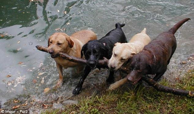Những bức ảnh vui cho thấy trẻ em và động vật cũng có tinh thần đoàn kết đáng ngưỡng mộ - Ảnh 8.