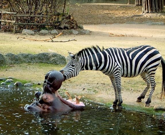 Những bức ảnh vui cho thấy trẻ em và động vật cũng có tinh thần đoàn kết đáng ngưỡng mộ - Ảnh 10.