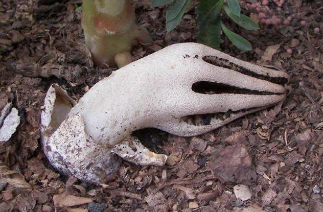 Những loài thực vật kỳ lạ cosplay bộ phận cơ thể người siêu đỉnh - Ảnh 1.