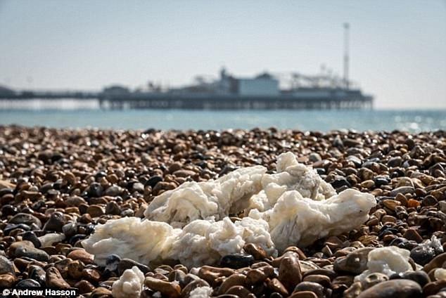 Thấy thứ màu trắng như bột này trên biển thì đừng chạm kẻo rước họa vào thân - Ảnh 2.