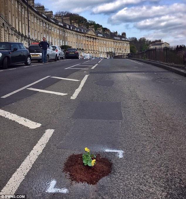 Sự thật bất ngờ phía sau hình ảnh hàng chục khóm hoa mọc lên giữa đường bê tông - Ảnh 2.