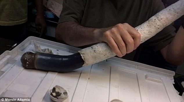 Phát hiện loài giun khủng dài ngoằng đến 1,5m kỳ dị nhất thế giới - Ảnh 2.