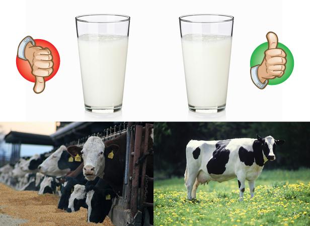 Sữa organic hay sữa thường? Câu trả lời thông minh cho các mẹ ở đây! - Ảnh 2.