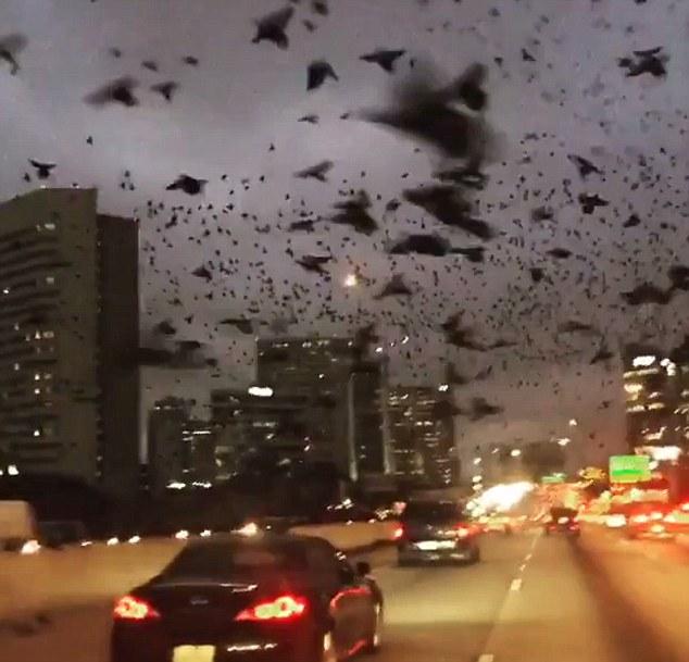 Kinh hoàng cảnh tượng hàng ngàn con chim xuất hiện