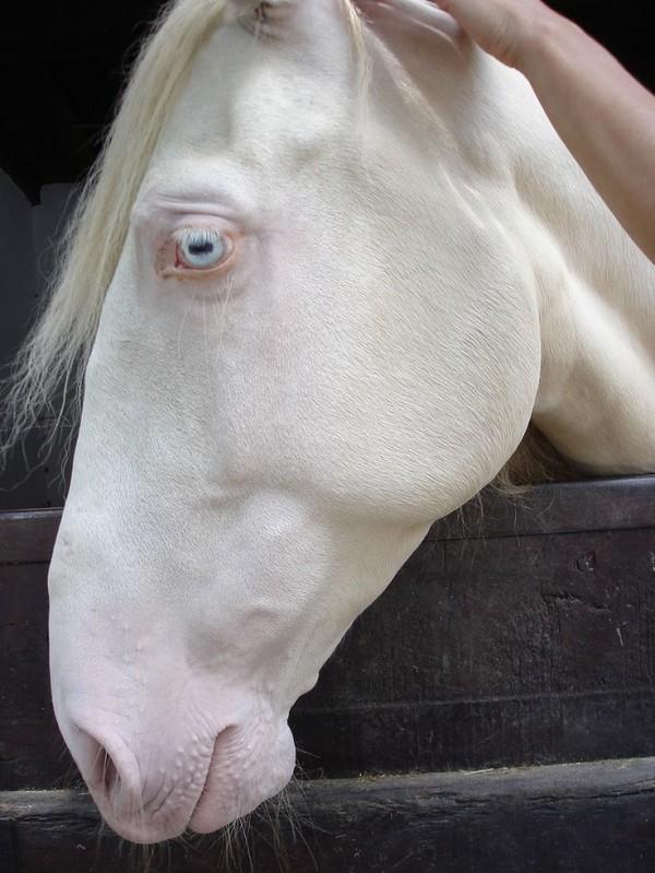 Khi động vật bị bạch tạng, trông chúng sẽ như thế này - Ảnh 4.