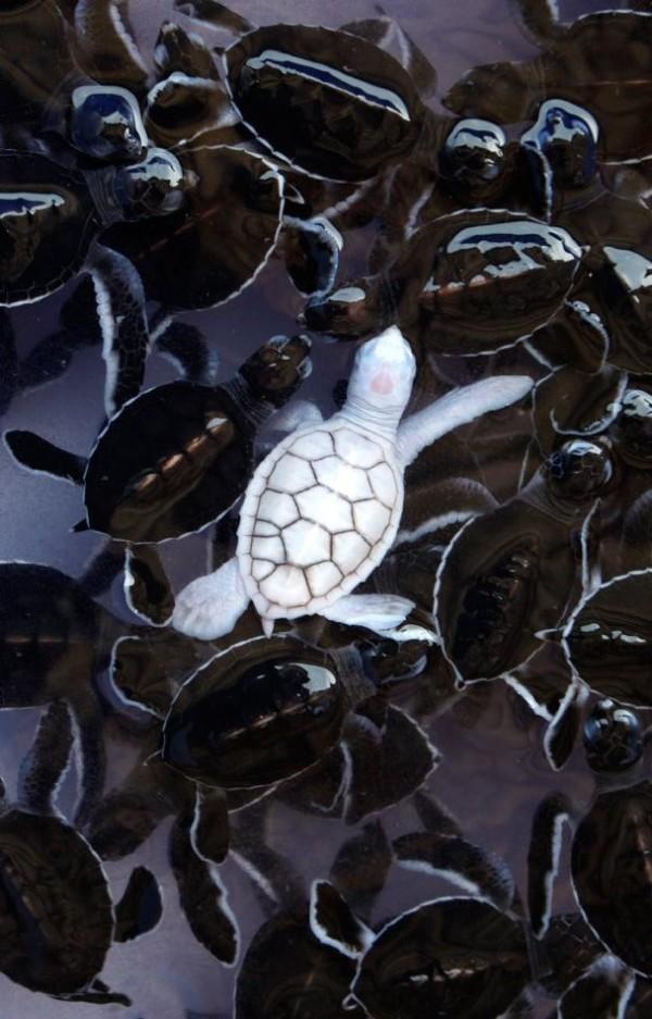 Khi động vật bị bạch tạng, trông chúng sẽ như thế này - Ảnh 6.