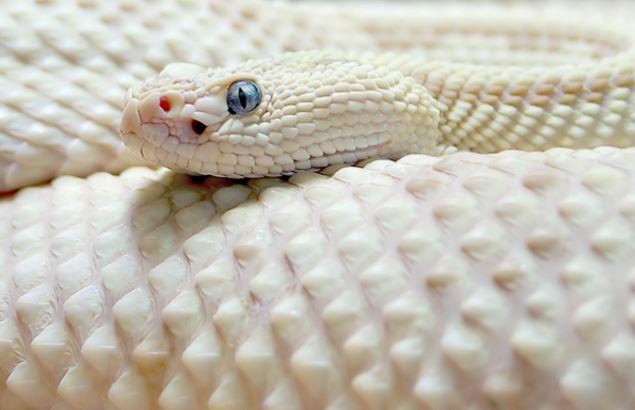Khi động vật bị bạch tạng, trông chúng sẽ như thế này - Ảnh 27.