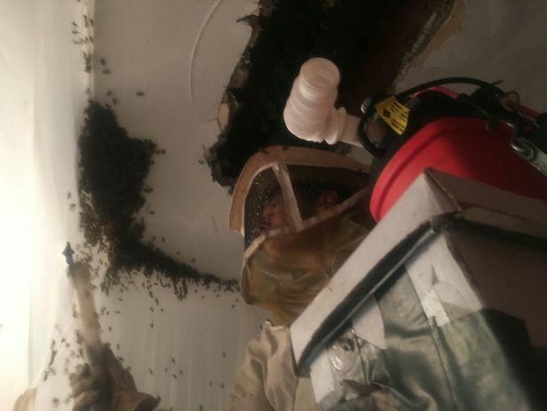 Dòng chất lỏng kì lạ chảy trên tường nhà, người phụ nữ sửng sốt khi nhìn thấy cảnh tượng này - Ảnh 4.