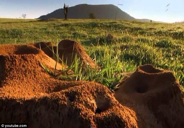 Không thể tin nổi: Cả thành phố khổng lồ của kiến sâu 8m, rộng 46m2 dưới lòng đất - Ảnh 5.