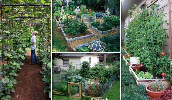 Tham khảo ngay những cách sáng tạo này để biến mảnh đất trống thành vườn rau đẹp mắt - Ảnh 1.