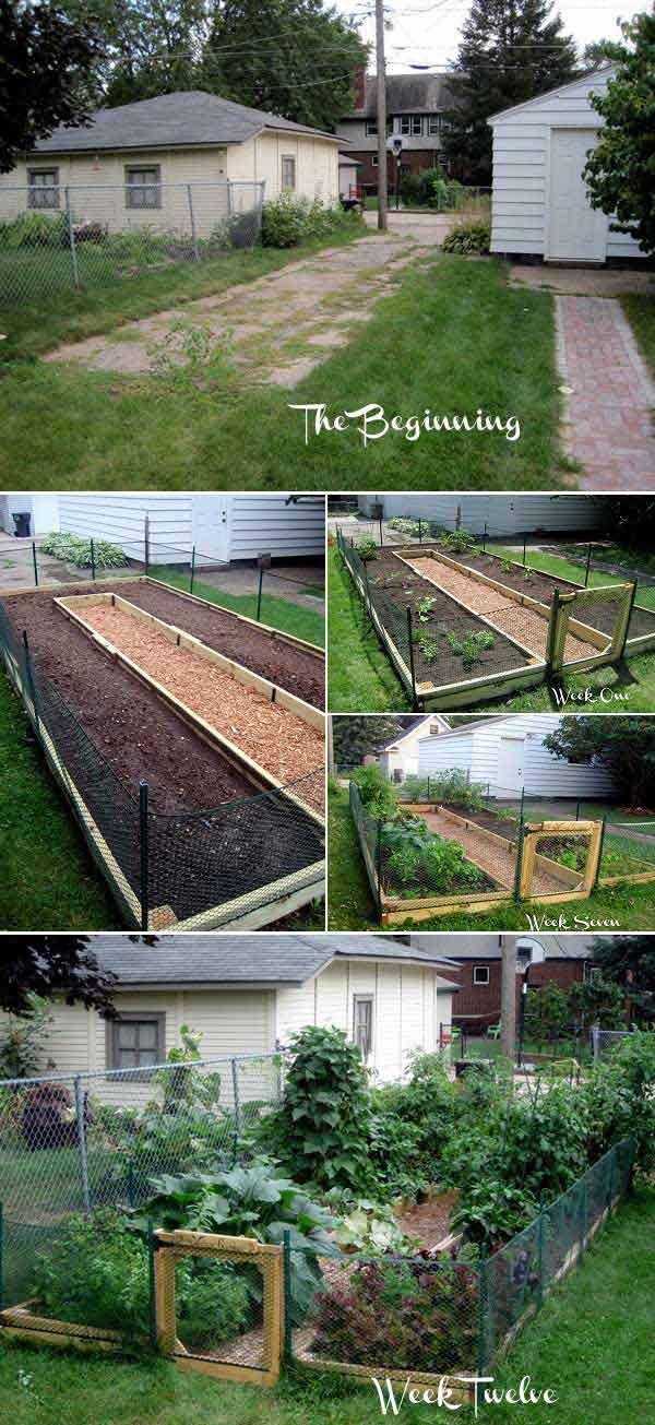 Tham khảo ngay những cách sáng tạo này để biến mảnh đất trống thành vườn rau đẹp mắt - Ảnh 6.