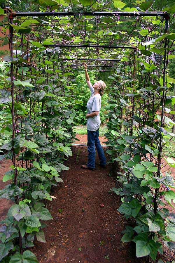 Tham khảo ngay những cách sáng tạo này để biến mảnh đất trống thành vườn rau đẹp mắt - Ảnh 13.