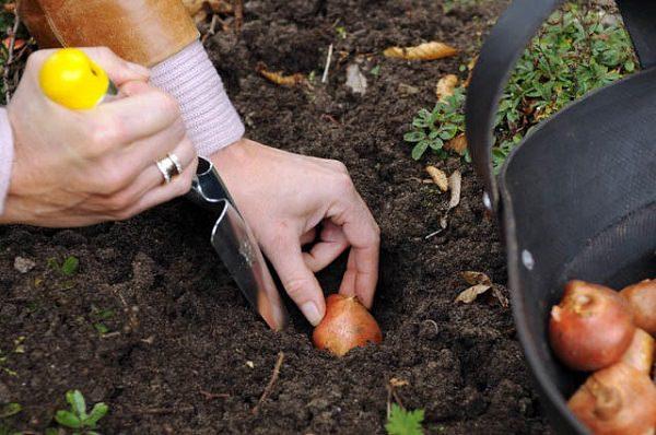 Phấn rôm của em bé sở hữu 9 công dụng trong làm vườn vô cùng bất ngờ không phải ai cũng biết - ảnh 7