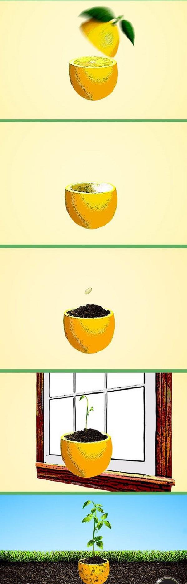 10 cách tự làm khay trồng hạt giống siêu tiện lợi và tiết kiệm dành cho những ai yêu làm vườn - Ảnh 1.
