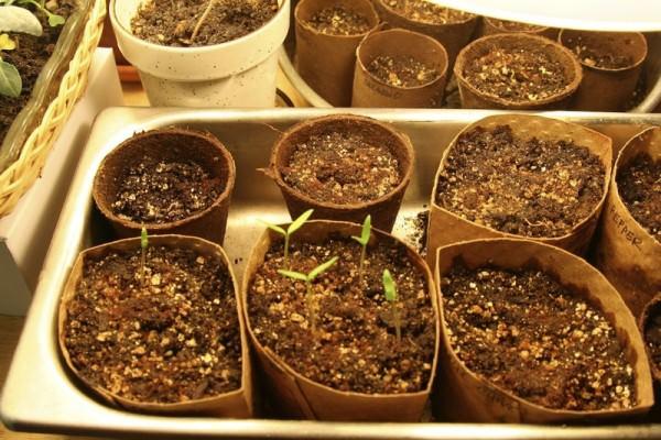 10 cách tự làm khay trồng hạt giống siêu tiện lợi và tiết kiệm dành cho những ai yêu làm vườn - Ảnh 5.